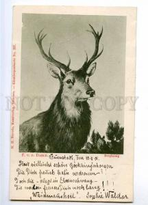 189954 HUNT Mountain King DEER by DAELE Vintage postcard