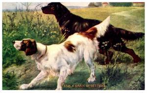 Dog  a Brace of Setters