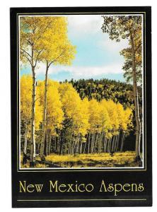 Golden Aspens New Mexico Vintage Postcard 4X6 NM