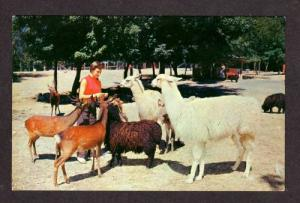 PA Pocono Wild Animal Farm STROUDSBURG PENN Postcard PC Pennsylvania
