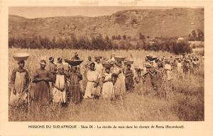 South Africa Sud-Afrique Mission, maize harvest fields of Roma (Basutoland)