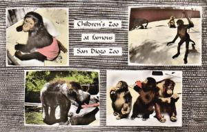 California San Diego Scenes At The Children's Zoo Real Photo
