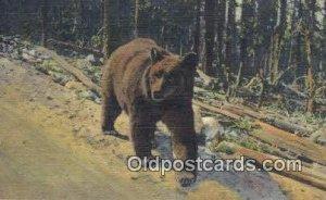 Yellowstone National Park Bear Unused