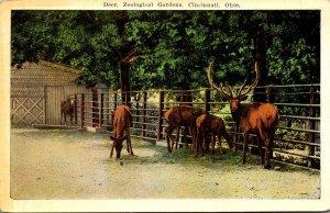 Ohio Cincinnati Zoological Gardens Deer