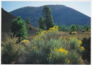 Sunset Crater National Monument Near Flagstaff Arizona