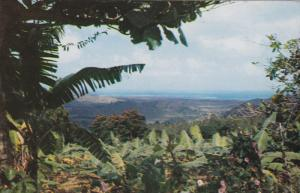 View From the Tropical Rain Forest, EL YUNQUE, Puerto Rico, PU-1959
