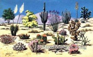 Cacti & Desert Flora - Misc, Arizona AZ