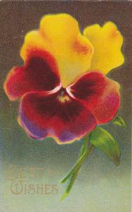 Best Wishes, Red and Yellow Pansies, PU-1911