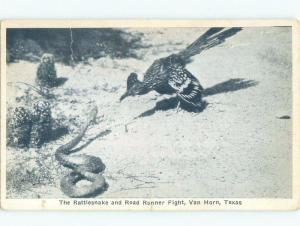 Unused W-Border RATTLESNAKE WITH ROADRUNNER BIRD Van Horn Texas TX E8302
