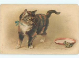 Pre-Linen CUTE KITTEN CAT LOOKING AT FROG BY THE MILK SAUCER AC5509