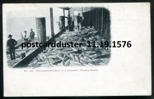 1576 - FRASER RIVER BC 1910s Unloading Salmon at Fish Cannery