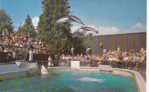 Two White Sided Dolphins Vancouver Public Aquarium British Columbia Canada