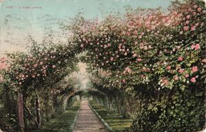Postcard A Rose Arbor Posted 1911