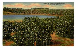 FL - Large Grapefruit Grove Near Orlando