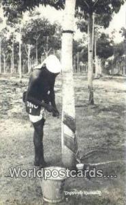 Malaya, Malaysia  Tapping Rubber Real Photo