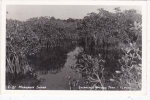 Florida Typical Mangrove Swamp Everglades National Park 1954 Real Photo
