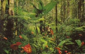 Hawaii Red Anthurium Giant Tree Ferns and Wild Bananas