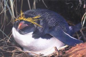 Penguin  Postcard #3
