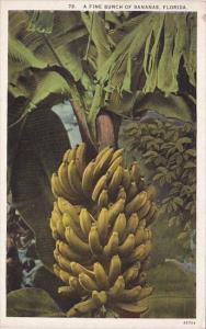 Florida A Fine Bunch Of Bananas