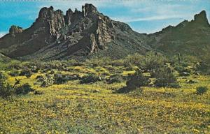 Arizona Ajo During Infrequent Years When Heavy Rains Combine With Warm Spring...