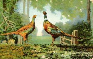 China Denny Pheasants