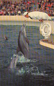 Zippy The Bottle Nosed Porpoise Jumps For Food Marineland Of The Pacific Palo...