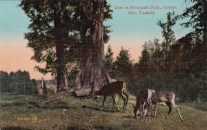 GUELPH, Ontario, Canada, 00-10s; Deer in Riverside Park