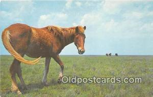 Wild Outer Banks Pony Ocracoke Island, North Carolina Postcard Post Card Ocra...