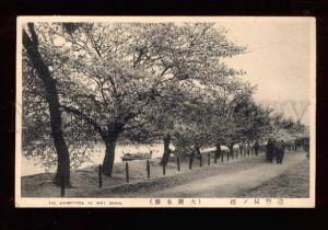 025287 JAPAN OSAKA Cherry-tree at Mint Vintage PC