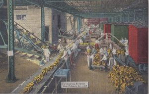 NEW ORLEANS - INTERIOR look at workers unloading bananas, 1930/40s