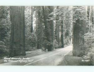 Old rppc NATURE SCENE Great Postcard AB0537