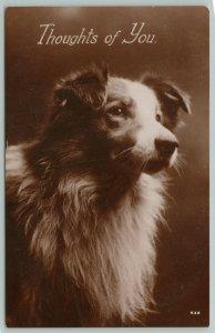 RPPC Does Fine Little Doggie Wants to Run?~Border Collie or Australian Shepherd
