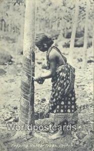 Ceylon, Ceylan, Sri Lanka Ceylon Tapping Rubber Trees
