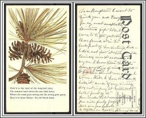 North Carolina Old North State Long-leaf Pine Undivided - [NC-019]