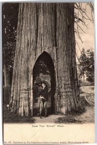 Man with Bicycle in Trunk of Cedar Tree, Everett WA UDB Vintage Postcard K04