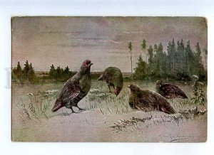 215375 Partridge HUNT Winter by MULLER Vintage Colorful PC