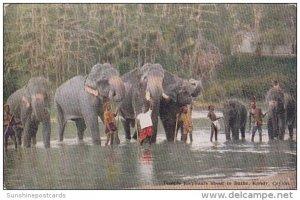 Temple Elephants About To Bathe Kandy Ceylon Sri Lanka