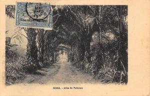 Belgian Congo Belge Boma Allee de Palmiers Postcard