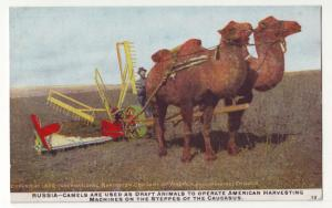 P1111  old card unused russia american harvester farming machine, fields camels