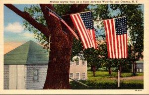 New York Historic Scythe Tree On A Farm Between Waterloo and Geneva Curteich