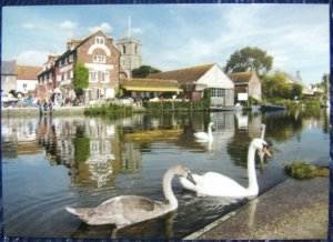 England Swans on the River Frome at Wareham - unposted
