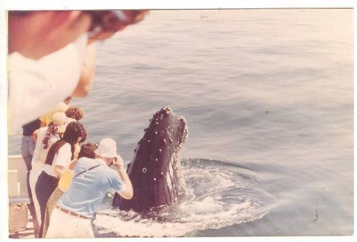 Great photo oppurtunity of a humpback whale, 50-70s