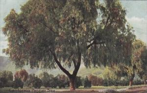 California Beautiful Pepper Tree