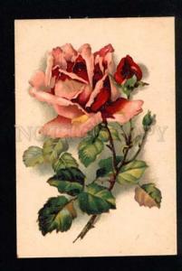035630 Huge Pink ROSES by C. KLEIN vintage PC