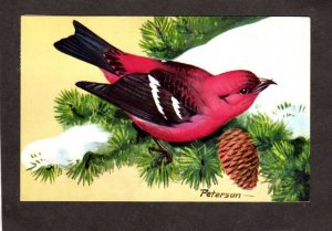 Artist Signed Birds R T Peterson White-winged Crossbill Painting Art Postcard