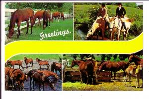 Fourview, Greetings, Horses,  Durham,