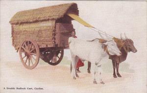 Sri Lanka Ceylon A Double Bullock Cart
