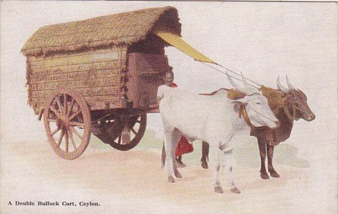 Sri Lanka Ceylon A Double Bullock Cart