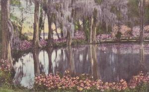 South Carolina Charleston Magnolia Gardens Albertype