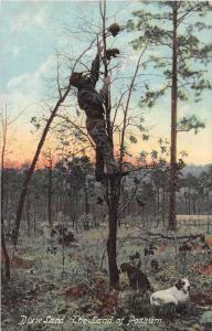 E19/ Black Americana Postcard c1910 Dixieland Land of Possum Man Tree 21